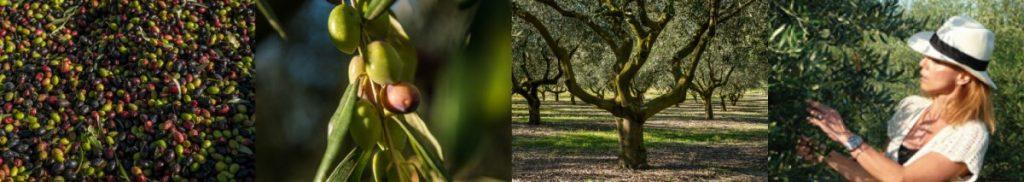 Le domaine de Pradines de Bas, c'est l'histoire qu'un arbre de vie et qu'une femme du pays languedocien écrivent ensemble